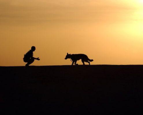 laisse rétractable pour chien
